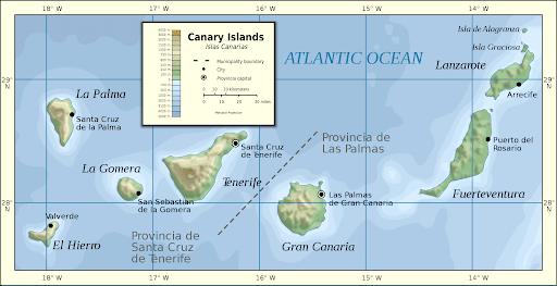 canary islands home of presa canario